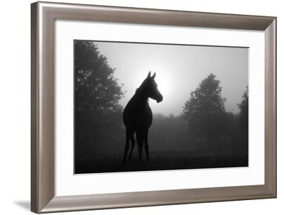 Black And White Image Of An Arabian Horse In For At Sunrise, Silhouetted Against Sun-Sari ONeal-Framed Art Print