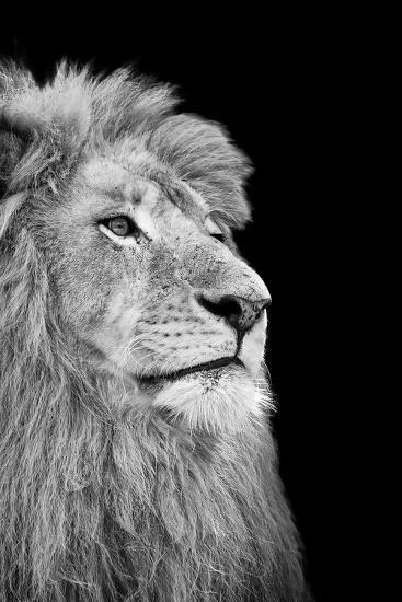 Black And White Isolated Lion Face-Snap2Art-Art Print