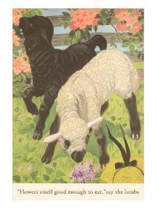 Black and White Lamb