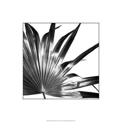 https://imgc.artprintimages.com/img/print/black-and-white-palms-i_u-l-f2vuez0.jpg?p=0