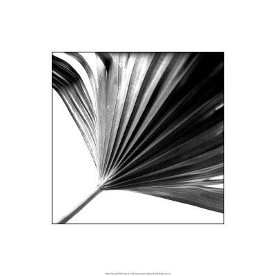 https://imgc.artprintimages.com/img/print/black-and-white-palms-ii_u-l-f2vuf00.jpg?p=0