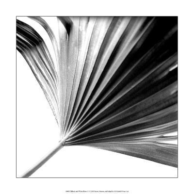 Black and White Palms II-Jason Johnson-Art Print