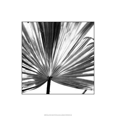 https://imgc.artprintimages.com/img/print/black-and-white-palms-iii_u-l-f2vuf10.jpg?p=0