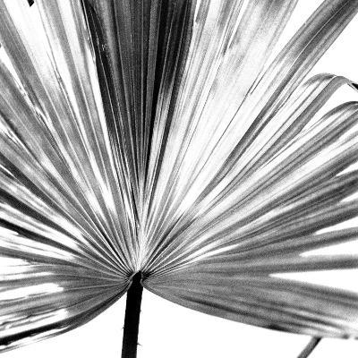 Black and White Palms III-Jason Johnson-Art Print