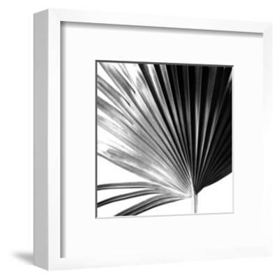 Black and White Palms IV-Jason Johnson-Framed Premium Giclee Print