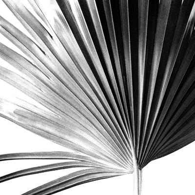 Black and White Palms IV-Jason Johnson-Art Print