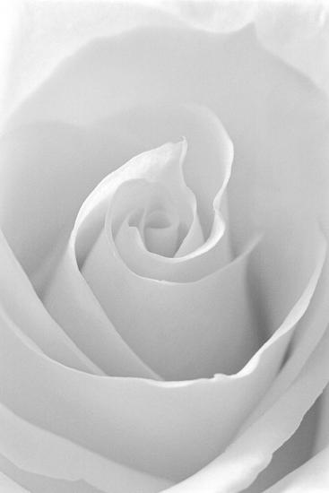 Black and White Rose Abstract-Anna Miller-Photographic Print