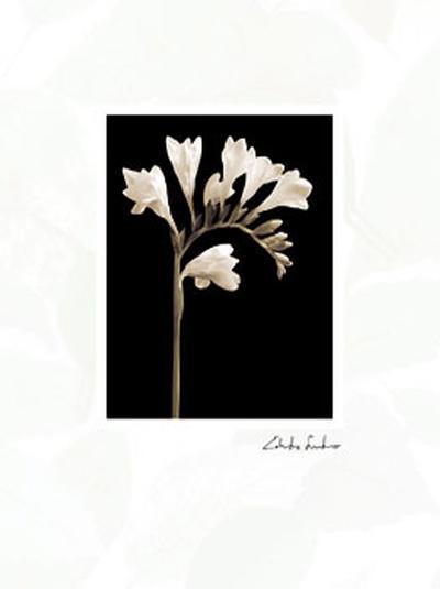 Black and White V-Edoardo Sardano-Art Print