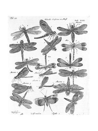 Black and White Winged Insect Chart