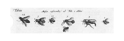 Black and White Winged Insects Diagram--Art Print