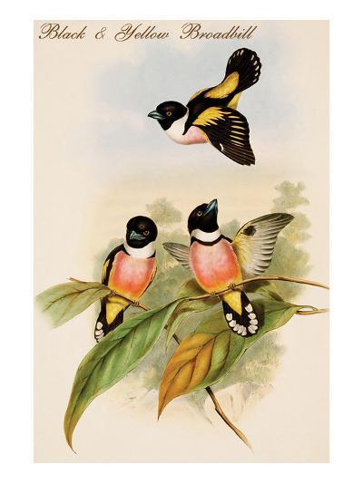Black and Yellow Broadbill-John Gould-Art Print