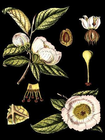 https://imgc.artprintimages.com/img/print/black-background-floral-studies-iii_u-l-p8lfiw0.jpg?p=0