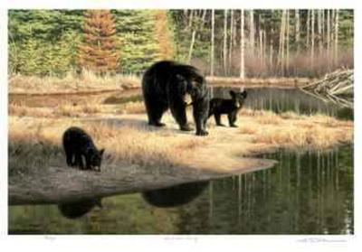 Black Bear Family-Claudio D'Angelo-Collectable Print