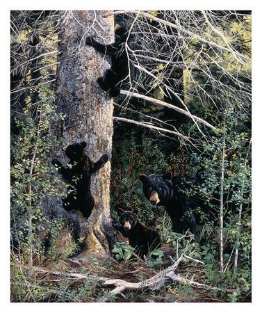 https://imgc.artprintimages.com/img/print/black-bear-family_u-l-f5evyg0.jpg?p=0