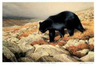 Black Bear in the Chickchocs-Claudio D'Angelo-Limited Edition