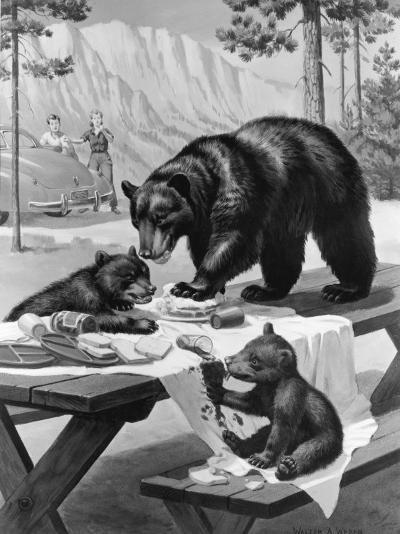 Black Bear Mother and Her Cubs Raid a Picnic, People Hide Behind Car-Walter Weber-Photographic Print