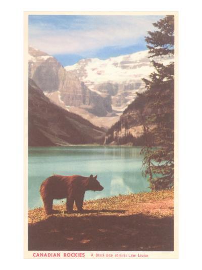 Black Bear near Lake Louise, Alberta, Canada--Art Print