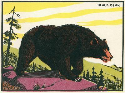 Black Bear--Art Print