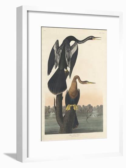 Black-bellied Darter, 1836-John James Audubon-Framed Premium Giclee Print