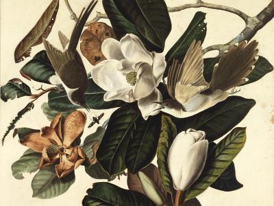 Black-Billed Cuckoo, 1822-John James Audubon-Giclee Print