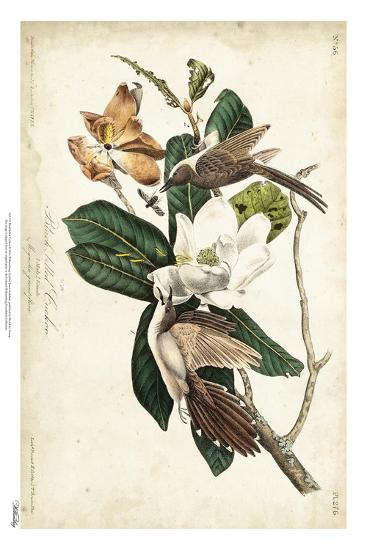 Black-billed Cuckoo-John James Audubon-Art Print