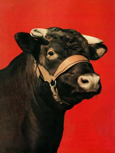 """Black Bull,""February 1, 1944-Salvadore Pinto-Giclee Print"