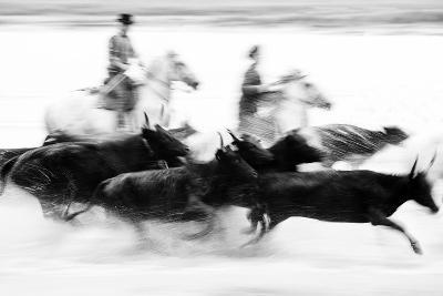 Black Bulls of Camargue and their Herders Running Through the Water, Camargue, France-Nadia Isakova-Photographic Print