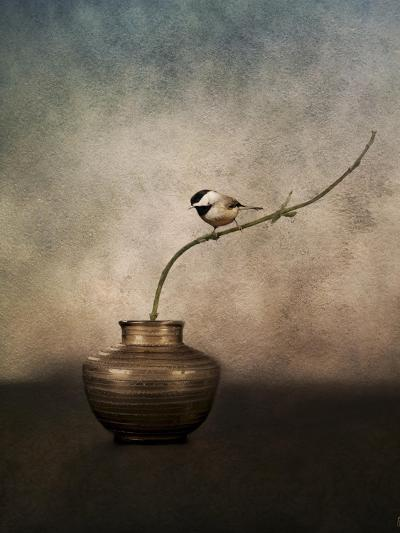 Black Capped Chickadee on a Vase-Jai Johnson-Giclee Print