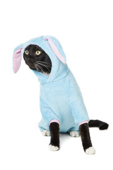 Black Cat in a Bunny Suit-vivienstock-Photographic Print