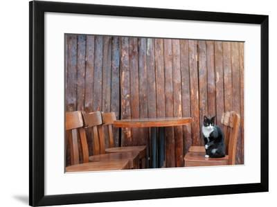 Black Cat Sitting on Chair in Outdoor Cafe.- kudla-Framed Photographic Print