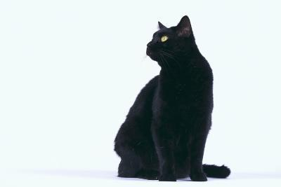 Black Cat-DLILLC-Photographic Print