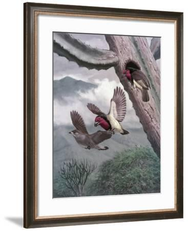 Black-Collared Barbets Drive Lesser Honey-Guide from Nesting Hole-Walter A. Weber-Framed Giclee Print