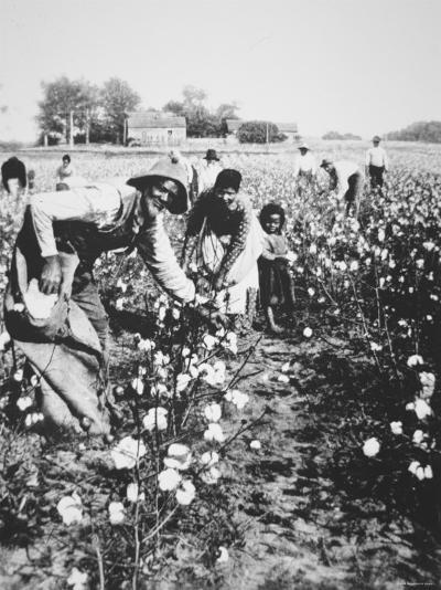 Black cotton pickers c 1900