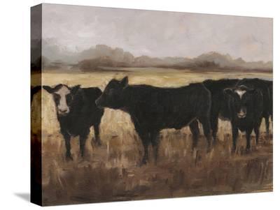 Black Cows I-Ethan Harper-Stretched Canvas Print