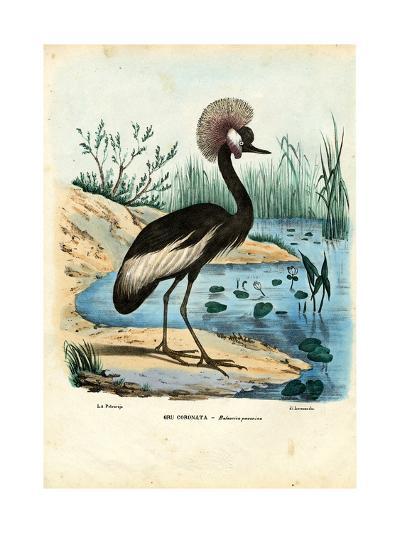 Black-Crowned Crane, 1863-79-Raimundo Petraroja-Giclee Print