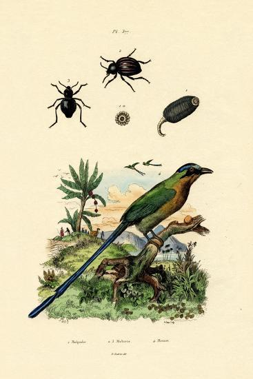 Black Cucumber, 1833-39--Giclee Print