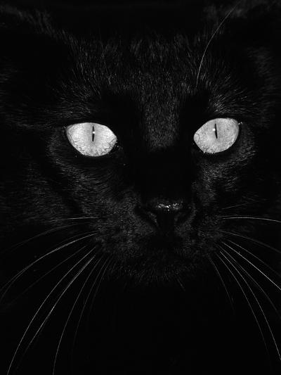 Black Domestic Cat, Eyes with Pupils Closed in Bright Light-Jane Burton-Photographic Print
