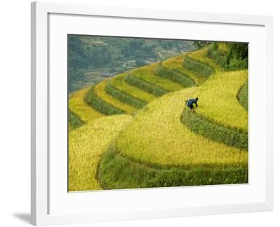 Black H'Mong Woman in Rice Field Terraces Near Tafen Village-Diana Mayfield-Framed Photographic Print