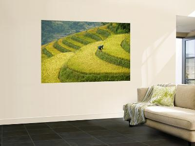 Black H'Mong Woman in Rice Field Terraces Near Tafen Village-Diana Mayfield-Wall Mural