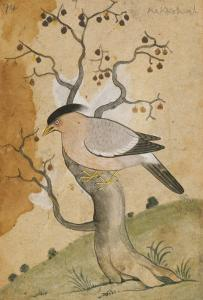 Black Headed Myna on a Tree-Trunk, India, 19th Century