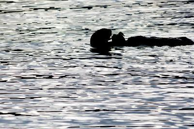 Black Lite Otter Eating Crab-Latitude 59 LLP-Photographic Print