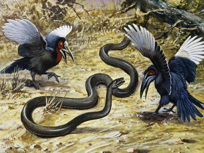 Black Mamba or Black-Mouthed Mamba (Dendroaspis Polylepis), Elapidae--Giclee Print