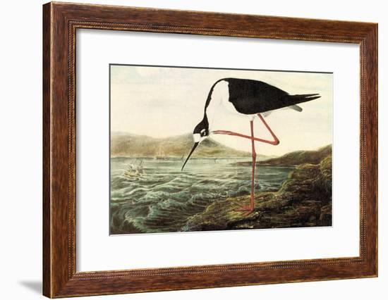 Black-necked Stilt-John James Audubon-Framed Art Print