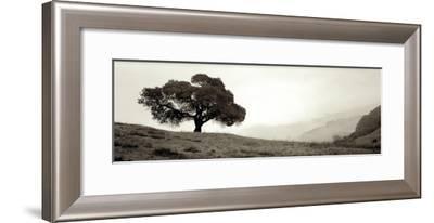Black Oak I-Alan Blaustein-Framed Photographic Print