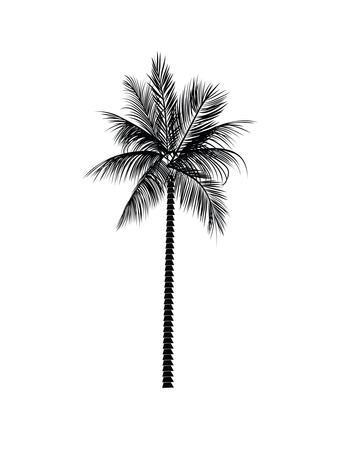 https://imgc.artprintimages.com/img/print/black-palm_u-l-f8c1r00.jpg?p=0