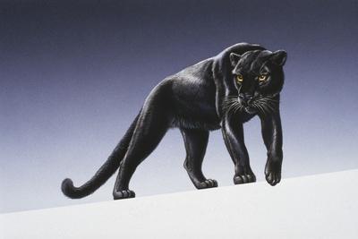 Black Panther-Harro Maass-Giclee Print