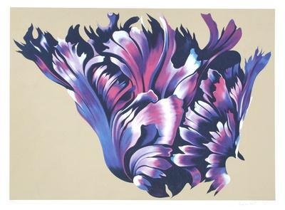 https://imgc.artprintimages.com/img/print/black-parrott-tulip_u-l-f5bxf90.jpg?p=0
