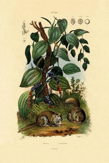 Black Pepper, 1833-39--Giclee Print