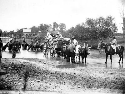 Black Refugees Travelling in a Bullock Cart, American Civil War, 1861-1865--Photographic Print