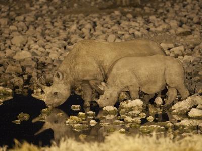 Black Rhino, Cow and Calf, Drinking at Night, Okaukuejo Waterhole-Ann & Steve Toon-Photographic Print